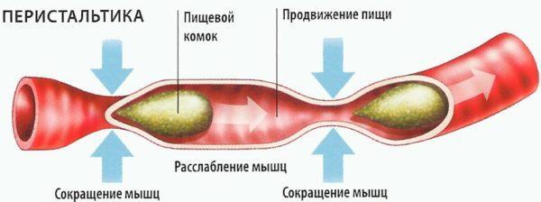 Лечебная физкультура способствует стимуляции кишечной перистальтики