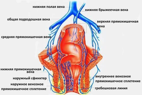 Упражнения помогают улучшить циркуляцию кровеносных и лимфатических сосудов прямой кишки