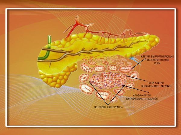 Поджелудочная железа и ее ферменты