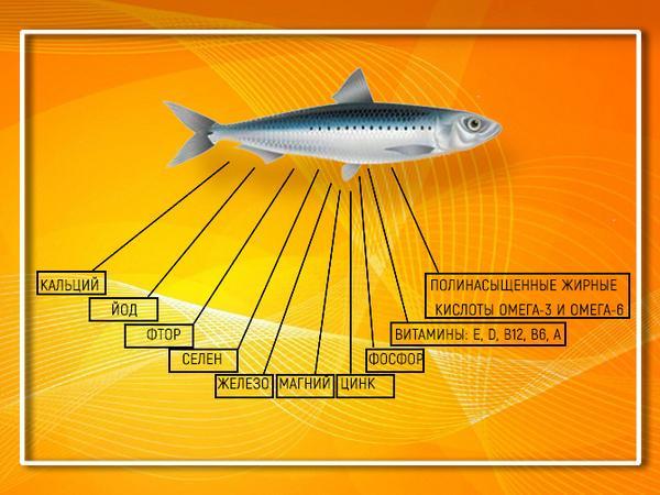 Рыба полезна содержаниемвитаминов, минералов, рыбьего жира