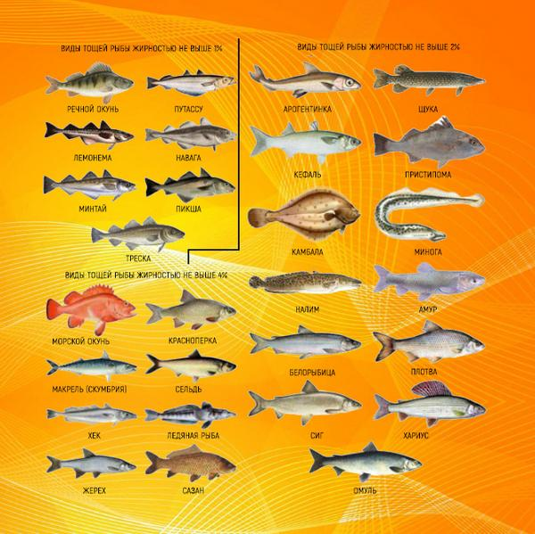 Виды тощих рыб с жирностью не выше 4%