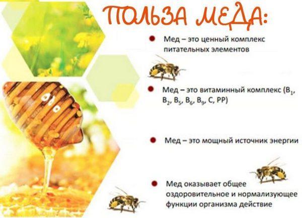 Какой мед полезен при поджелудочной железе