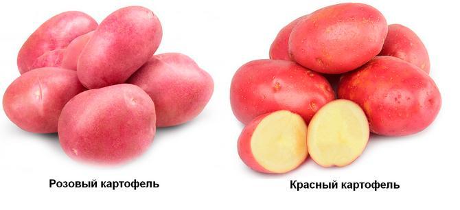 Красный и розовый сорта картофеля