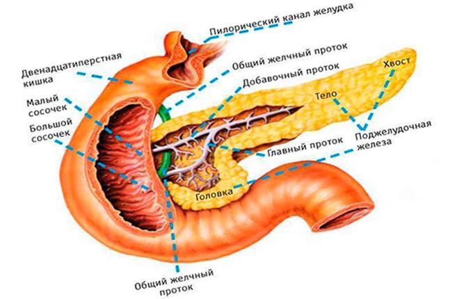 Протоки в поджелудочной железе